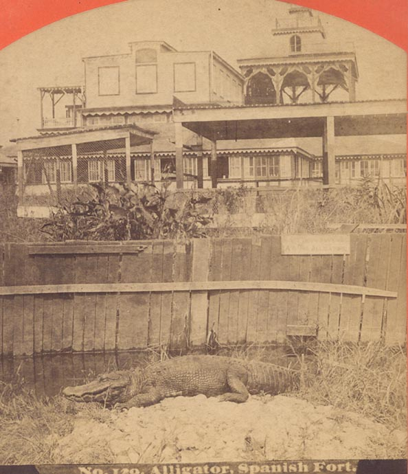 1880 - Alligators at Spanish Fort